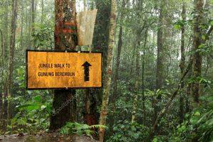 Draft 4 Gunung Berembun depositphotos 11431639 stock photo rainforest at beremban mountain cameron