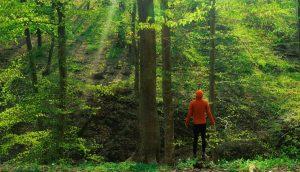 hiker forest PY7K84Z 1