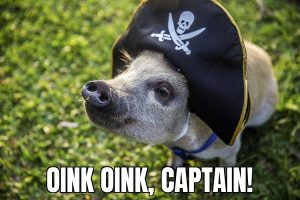 Oink oink, captain