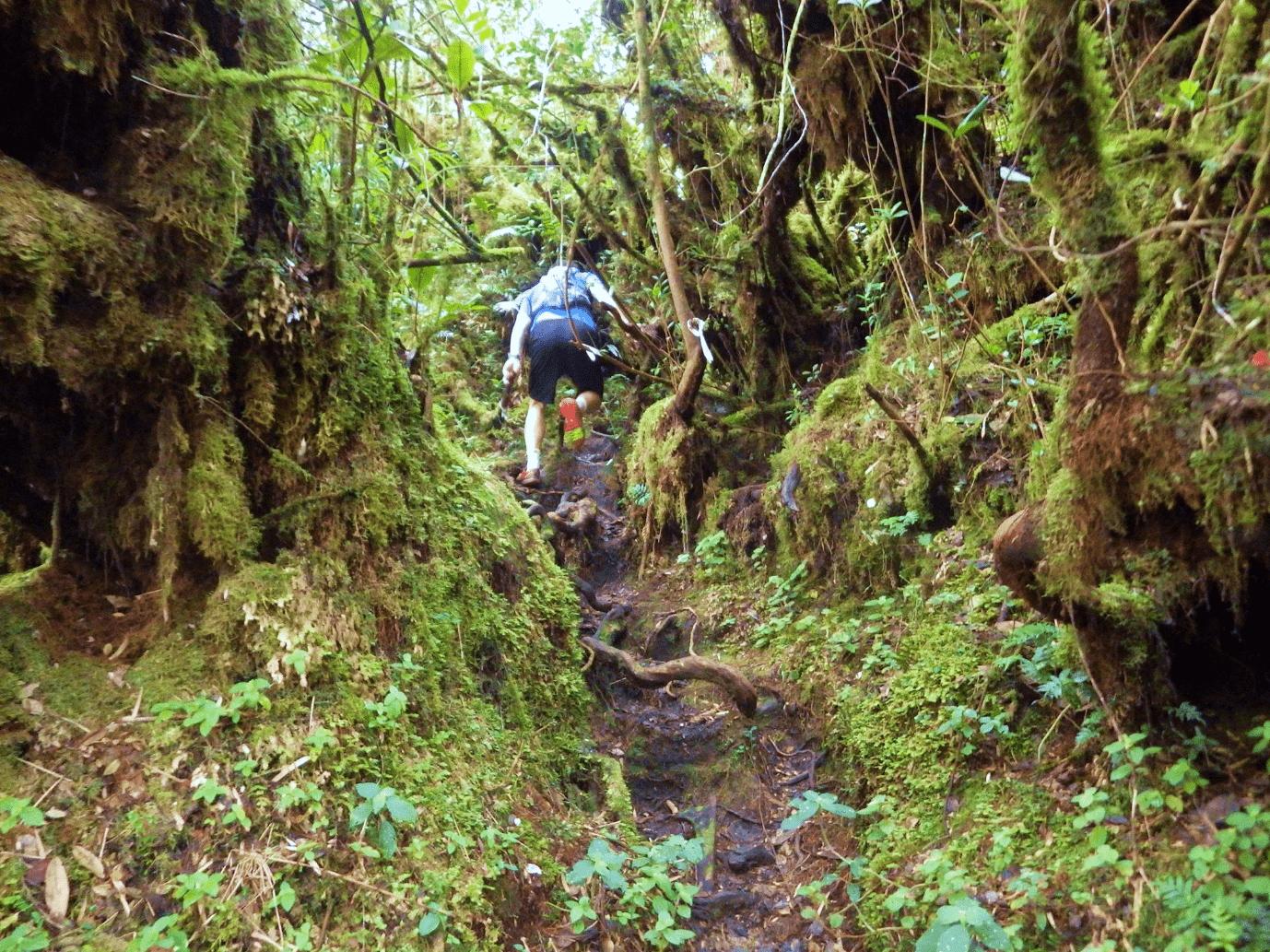Gunung Suku mossy forest